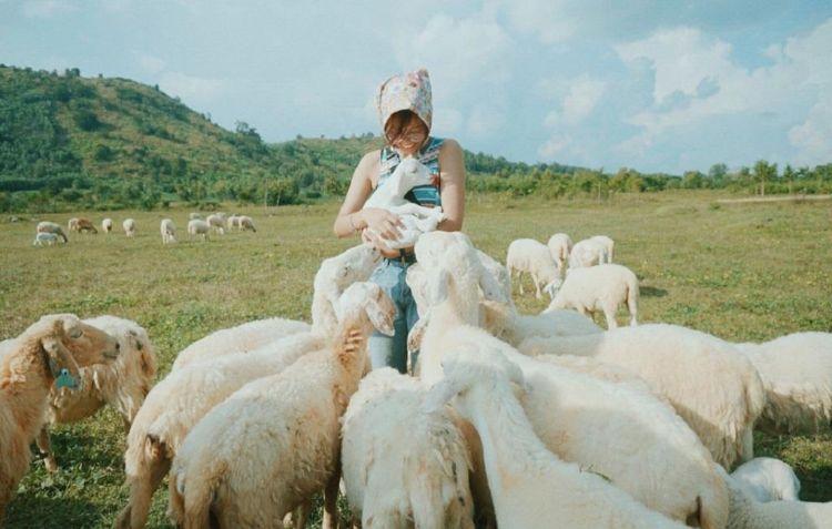 trang trực cừu suối nghệ